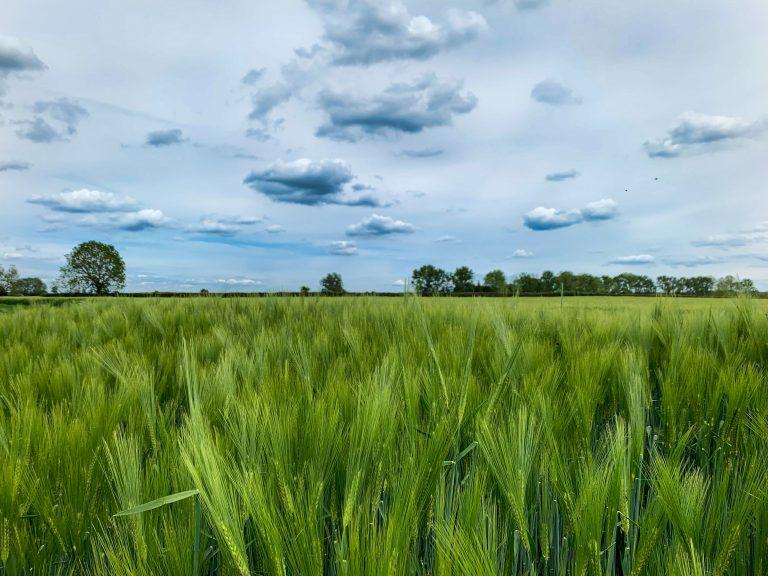 green-grass field during daytime